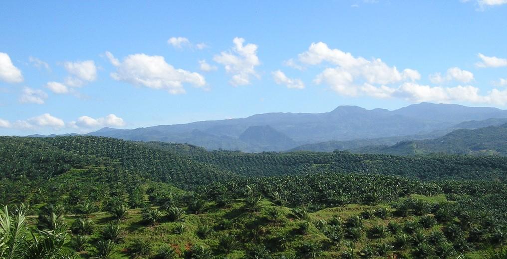 Oil_palm_plantation